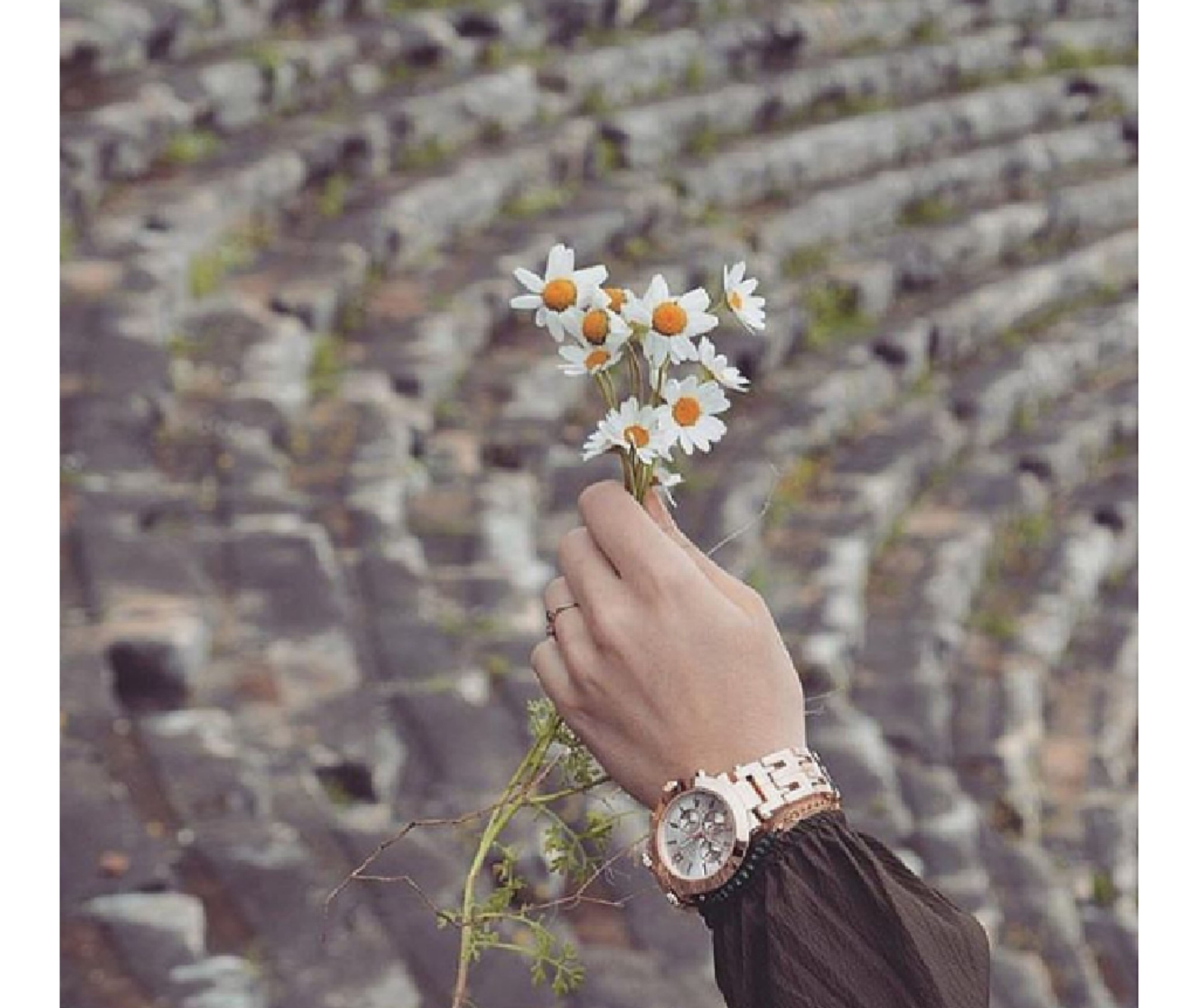 human hand, human body part, flower, focus on foreground, close-up, day, outdoors, nature, beauty in nature, adults only, one person, freshness, flower head, adult, people