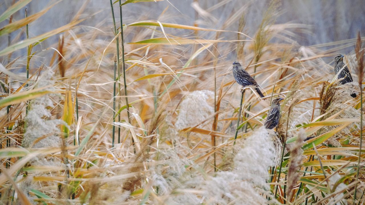 Photo essay - A day in the life. Platte River Grand Island, Nebraska November 6, 2016 A Day In The Life America Animals In The Wild Beauty In Nature Birds_collection Camera Work Eye Em Nature Lover Eye For Photography Grassland Growth MidWest Nature Nebraska Nikkor 500mm F8 On The Road Outdoors Photo Diary Photo Essay Prarie Road Trip Sparrows Storytelling Travel Photography Vesper Sparrow Visual Journal