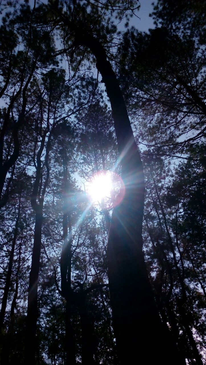 tree, sunbeam, sunlight, low angle view, sun, nature, lens flare, outdoors, no people, beauty in nature, forest, day, tranquility, growth, scenics, branch, tree trunk, sky