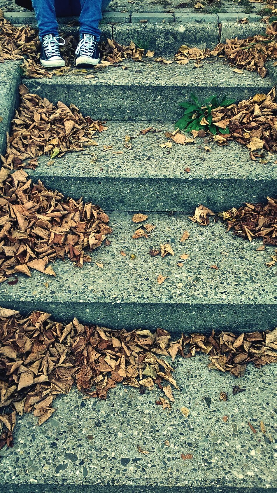 Stears Leaf Sand Paving Stone Day Leaves Footpath Stone Material Outdoors The Way Forward Fallen Leaf Full Frame Surface Level