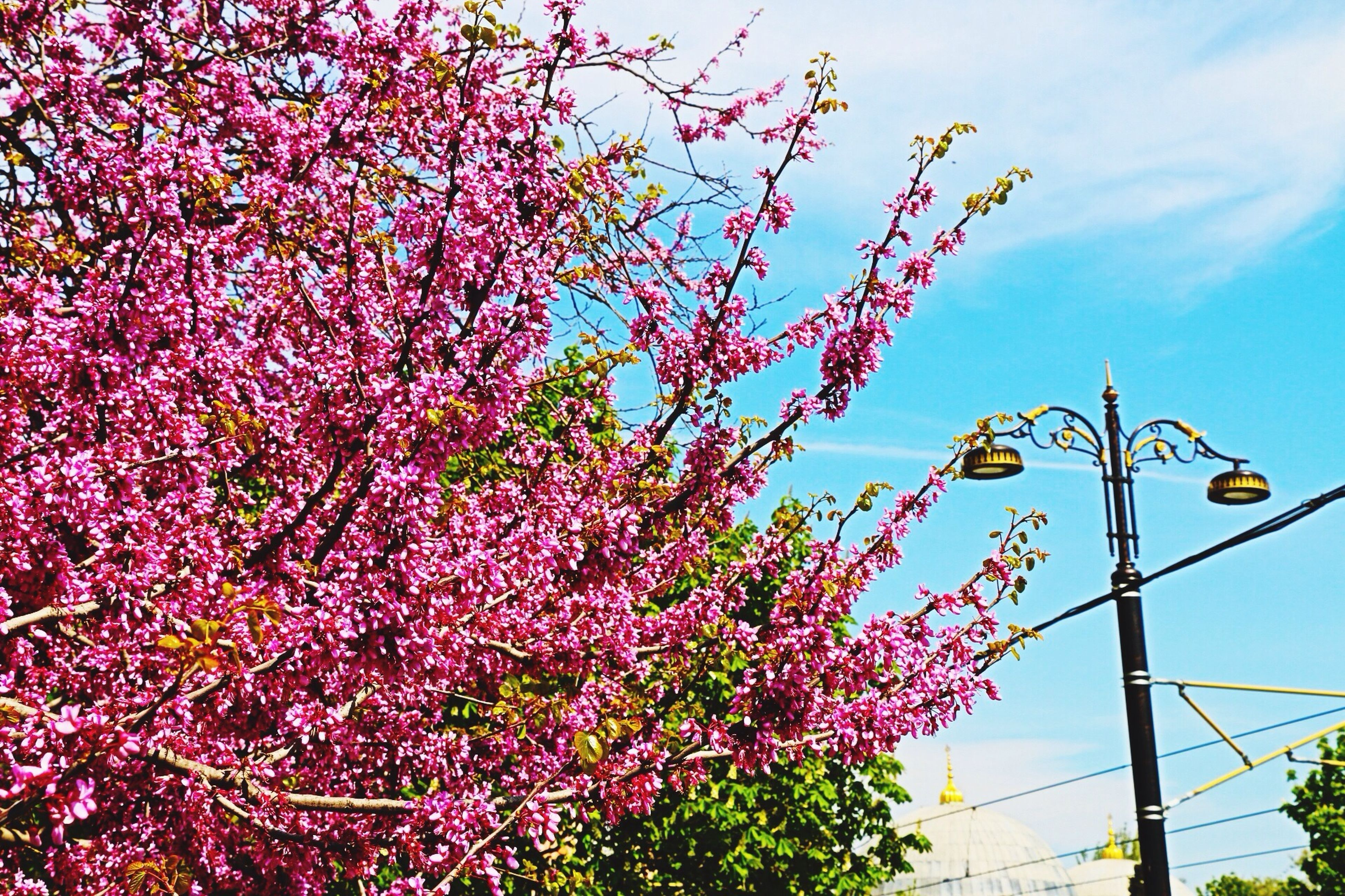 Tree Art Enjoying Life Urban Nature Spring!