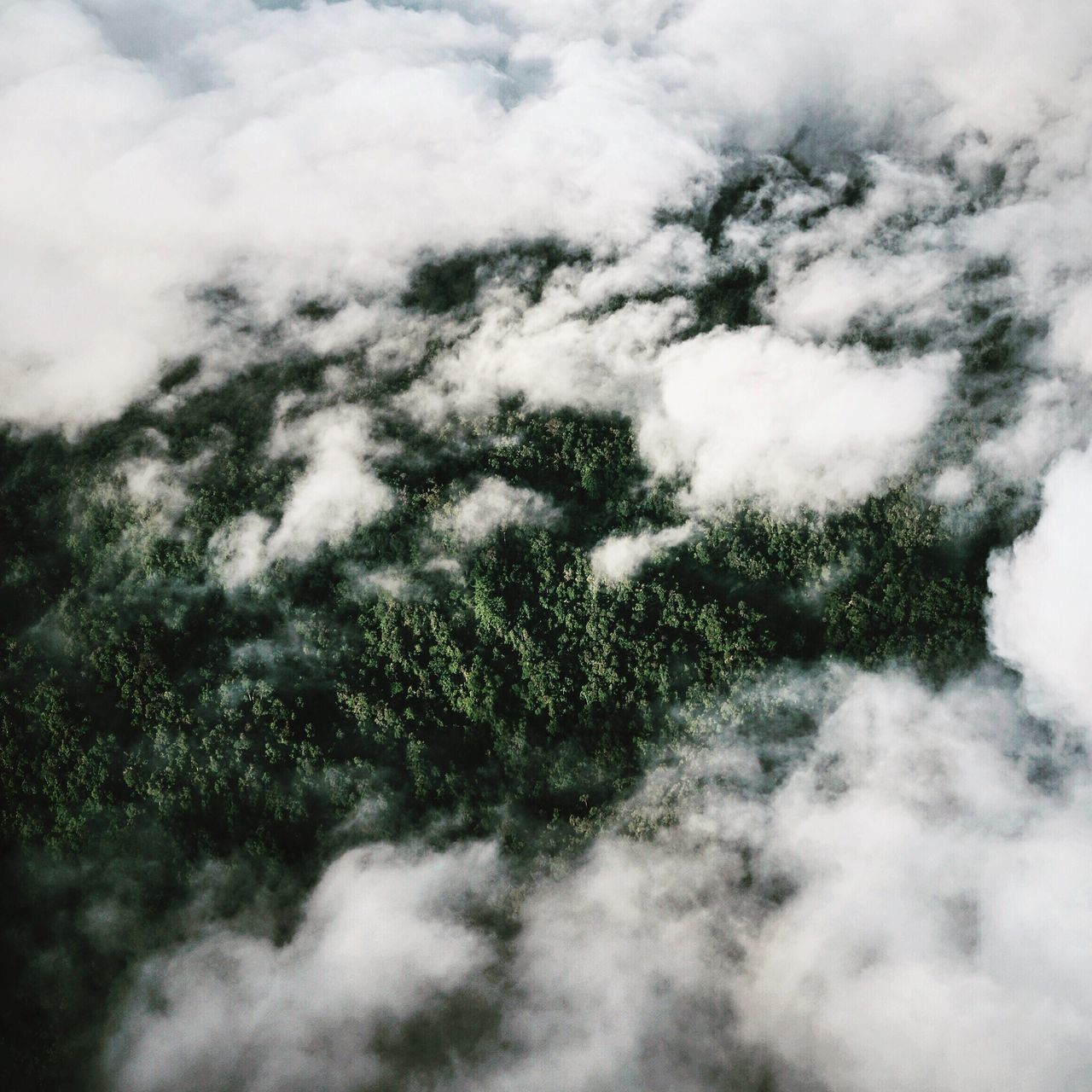 View From Above Birds Eye View Flying From An Airplane Window Forest Rainforest Jungle Tropical Tropical Paradise Cloud Clouds Green Nature Beauty In Nature Scenics Tranquility Cloudscape Day Outdoors Aerial View Remote Traveling Maluku  ASIA My Year My View