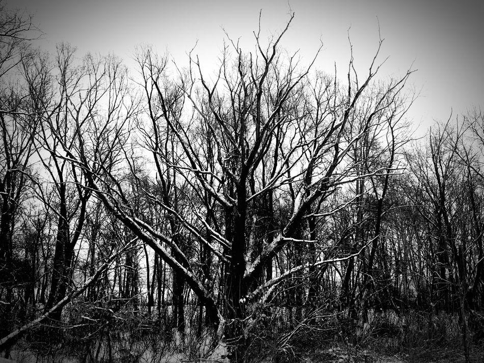 Tree Nature No People Outdoors Blackandwhite Black And White Snow