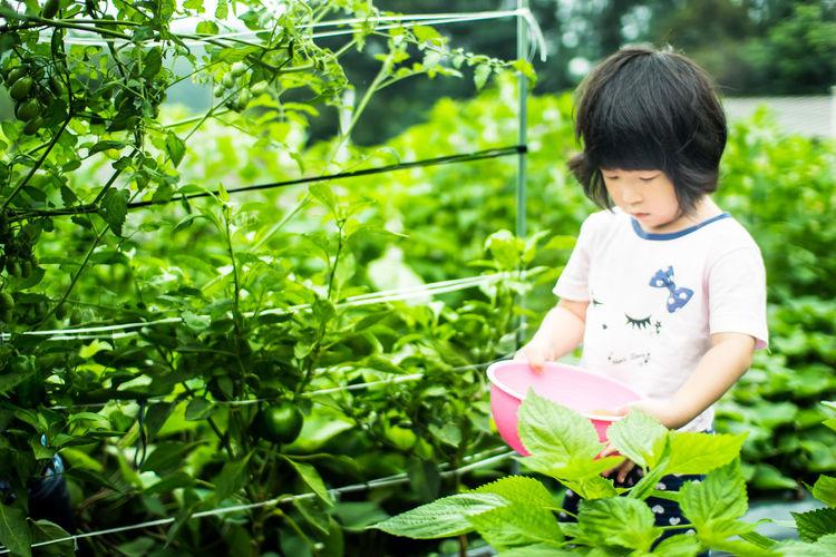 Asian Girl Childhood Cute Cute Little Girl Doughter  Littlelady Lovely
