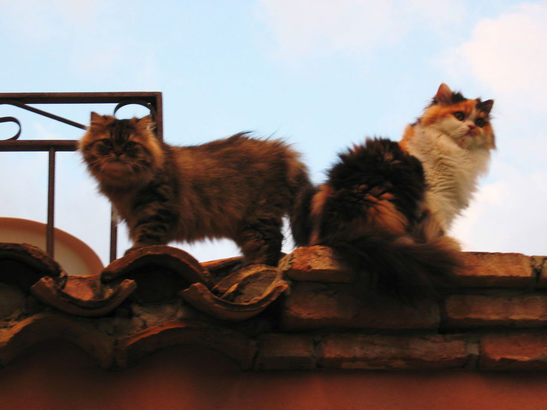 2003 Animal Themes Cats On The Roof Cloud - Sky Day Feline No People Outdoors Santa Margherita Di Pula Sardegna Sitting