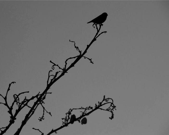 Bird Bird Photography Blackandwhite Black And White Nikon EyeEm Best Shots EyeEmBestPics First Eyeem Photo Followme Sunday Check This Out Showing Imperfection Bestoftheday Taking Photos India Chennai