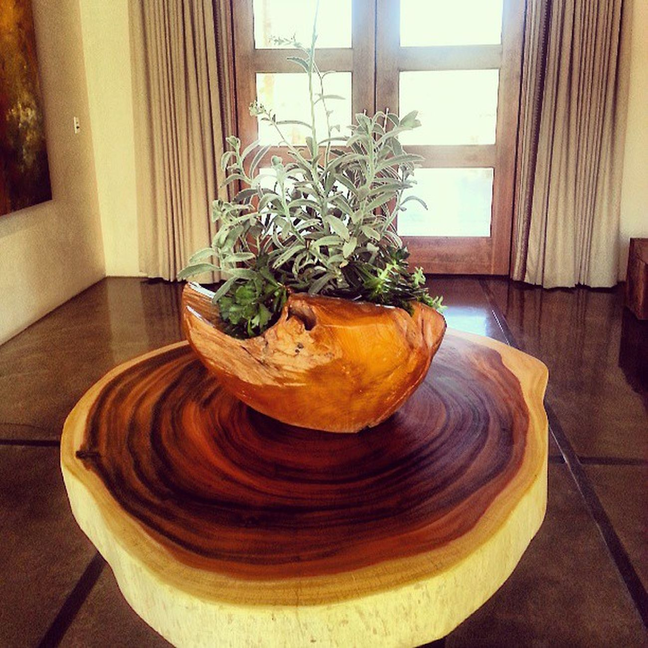 Fssantafe Fsfotog Coffeetable Lobby Sequoiagallery Succulents