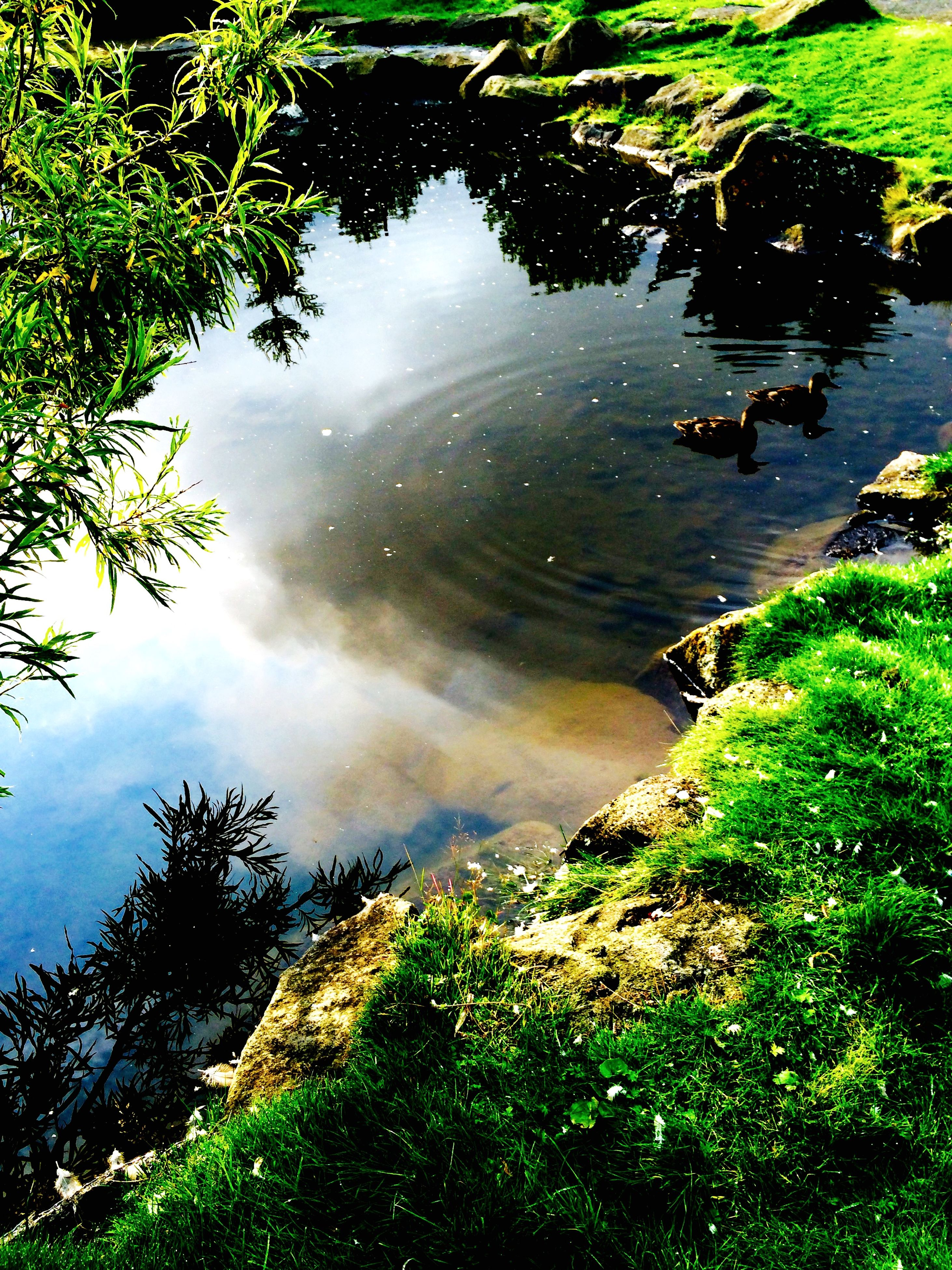 water, tranquility, tranquil scene, lake, scenics, high angle view, reflection, beauty in nature, green color, nature, tree, plant, river, growth, idyllic, grass, day, non-urban scene, outdoors, no people