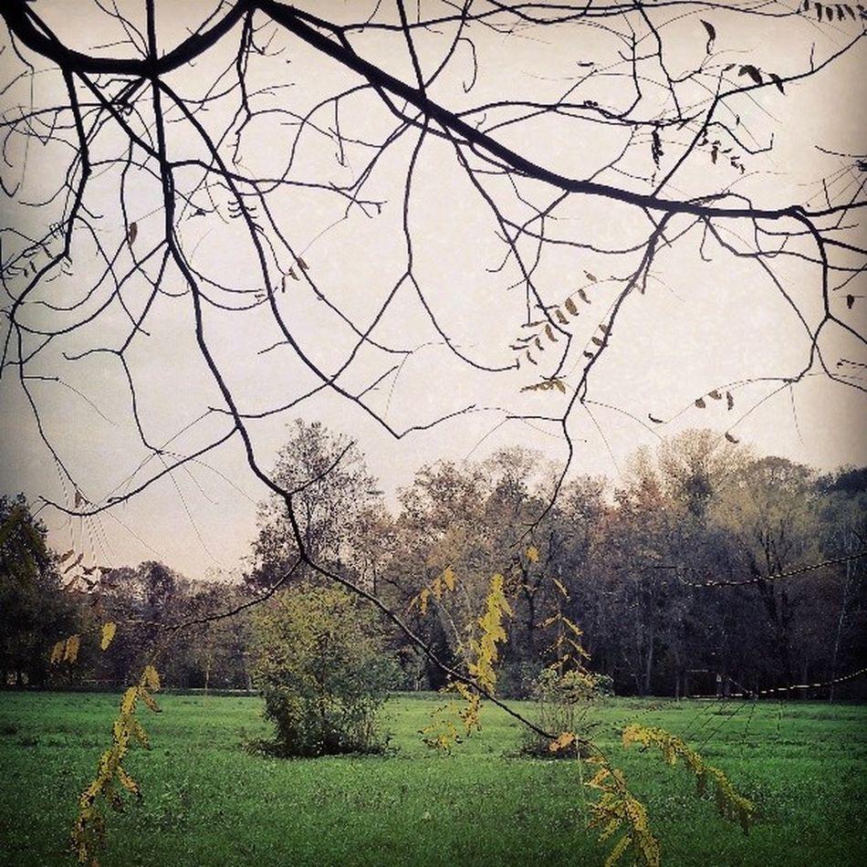 #nature #green #urbangreen #november #light #tree #autumn #fall #milan #igermilan Nature Light Green Tree Autumn Fall November Milan Urbangreen Igermilan