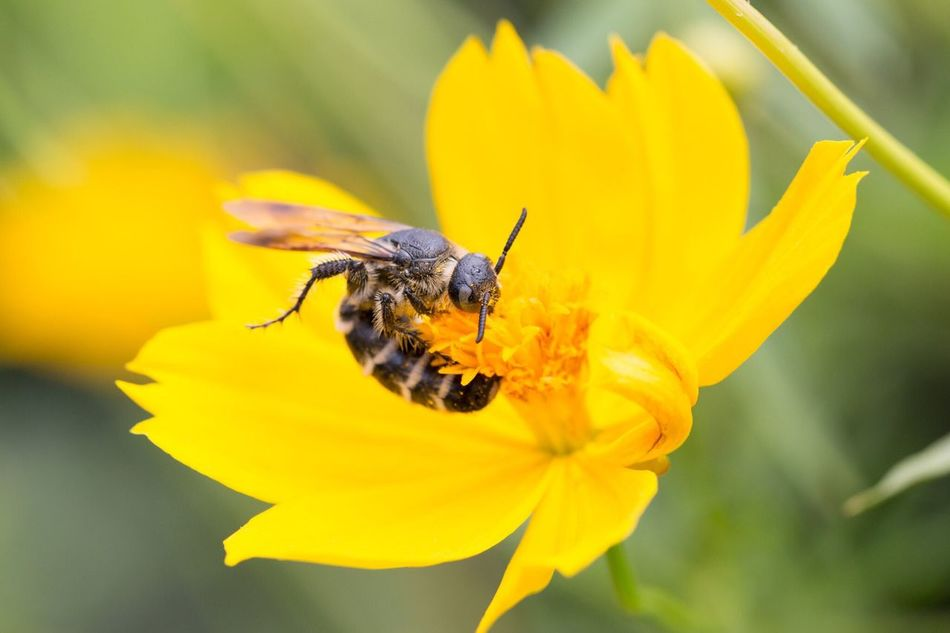 Beautiful stock photos of bee, Animal, Animal Themes, Animals In The Wild, Bee