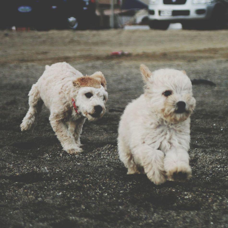Cute Puppies Dogslife Enjoying The Sun Running