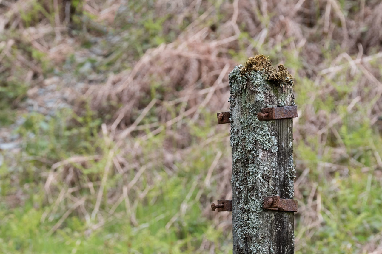 Nature Nature On Your Doorstep Nature Photography Nature_collection Old Rust Rusty Walking Around Wood Wood - Material WoodLand Lichen