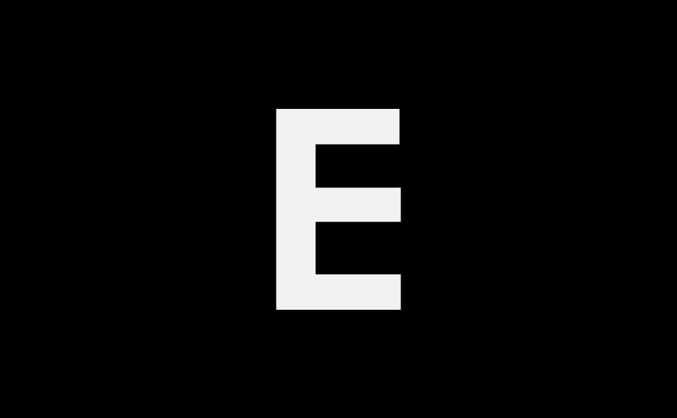 Orange color rubber gloves for cleaning on white background, workhouse concept Cleaning Colors Conceptual Cut Out Freshness Glove Human Body Part Human Hand Hygiene Orange Color People Rubbish White White Background Workhouse