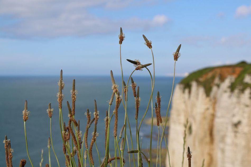 Beautiful stock photos of weed,  Botany,  Cliff,  Day,  Freshness