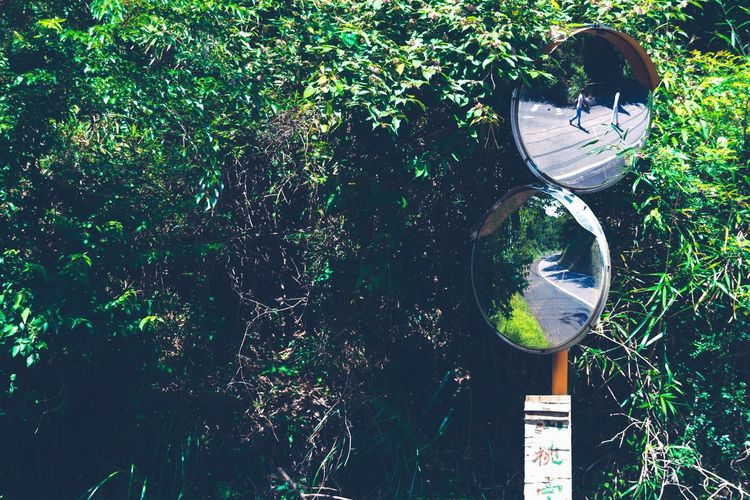 Human Vs Nature Reflection Greenery Getting Inspired Countryside Summer Views Travel Minimalism Hugging A Tree Light And Shadow Fine Art Abstract Still Life Fresh On Eyeem  Sommergefühle