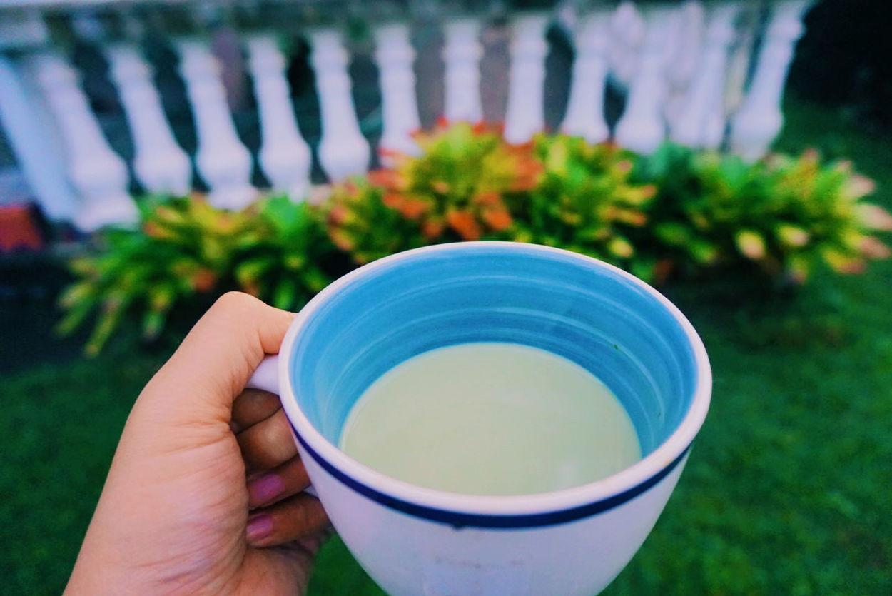 Matcha Matcha Latte Matchagreentea Matcha Tea MatchaLatte Matcha Green Tea Matchalover Matchatealatte Matchatea Matchagreentealatte Matcha Green Tea Latte Outdoors Grass Morning Tea - Hot Drink Drink Plant