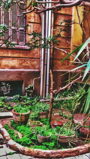 Plant Day No People Nature Growth Infinix Beauty In Nature Nature Alexandria Infinixhot3 Infinixphotography Infinixcam