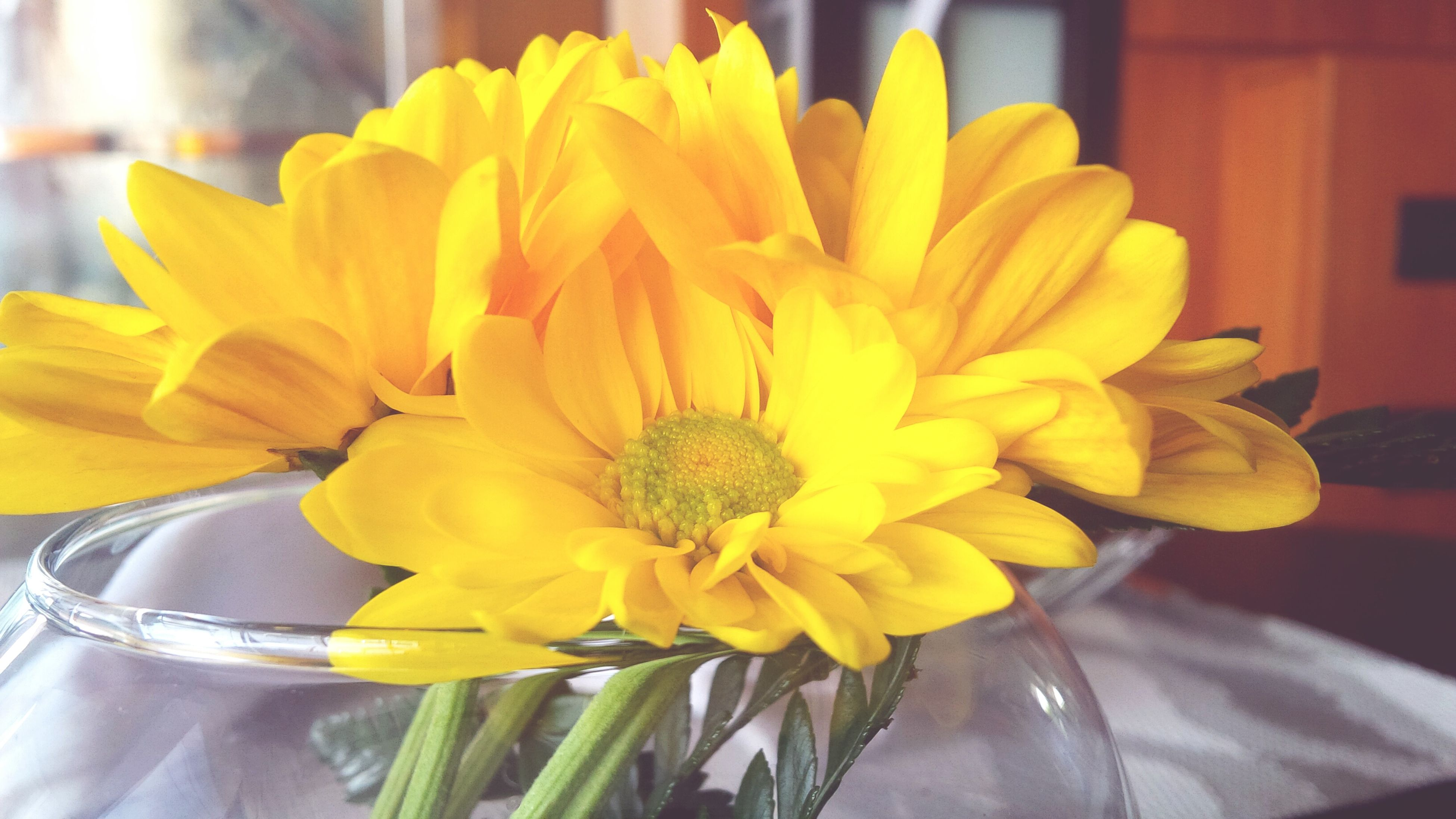 flower, yellow, petal, freshness, flower head, fragility, close-up, focus on foreground, beauty in nature, indoors, blooming, nature, growth, pollen, vase, plant, single flower, day, potted plant, table