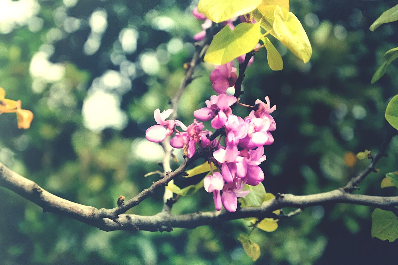 Flowers Flower Beauty In Nature Growth Nature Fragility Petal Outdoors Freshness Focus On Foreground Day Pink Color No People Branch Flower Head Close-up Tree Blooming (null)