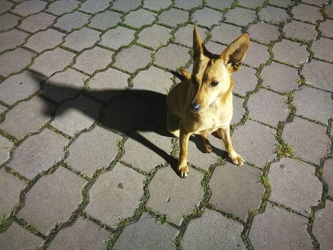 Animal Themes Street Street Animals Dog Pets Outdoors Animal Nature Animal Posing Dog Posing