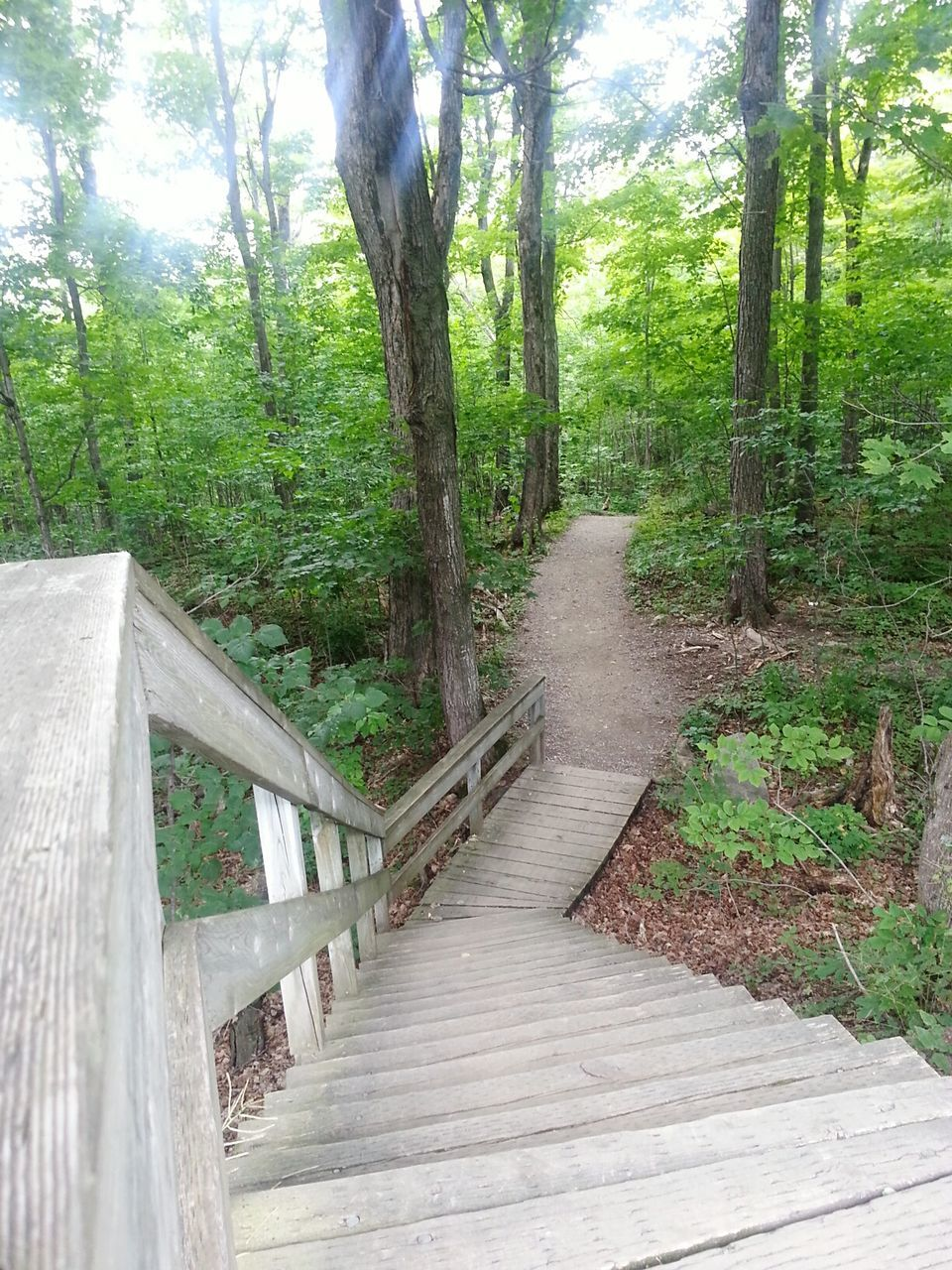 High Angle View Of Wooden Steps In Gatineau Park