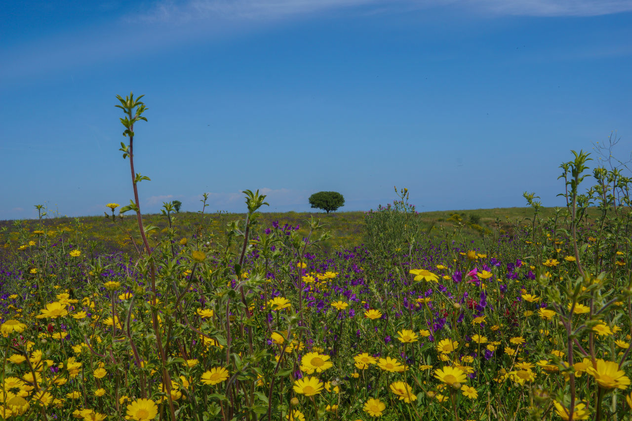 Abundance Agriculture Beauty In Nature Blooming Calabria Calabria (Italy) Calabriadascoprire Day Field Flower Fragility Freshness Growth Horizon Over Land In Bloom Landscape Nature Plant Rural Scene Scenics Sky Tranquil Scene Tranquility Wildflower Yellow