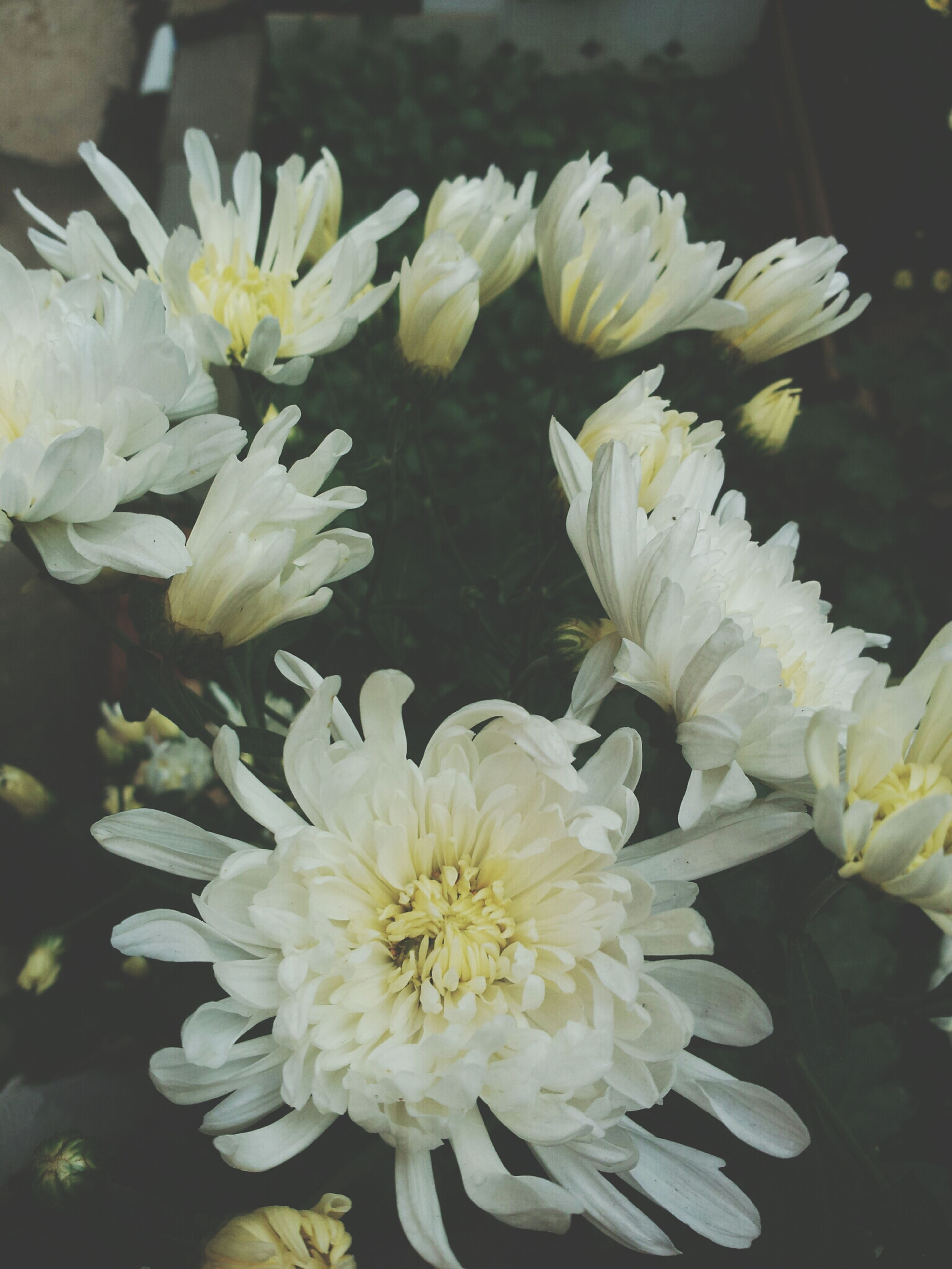 flower, petal, freshness, flower head, fragility, white color, beauty in nature, growth, blooming, close-up, nature, plant, focus on foreground, high angle view, indoors, in bloom, pollen, no people, white, yellow