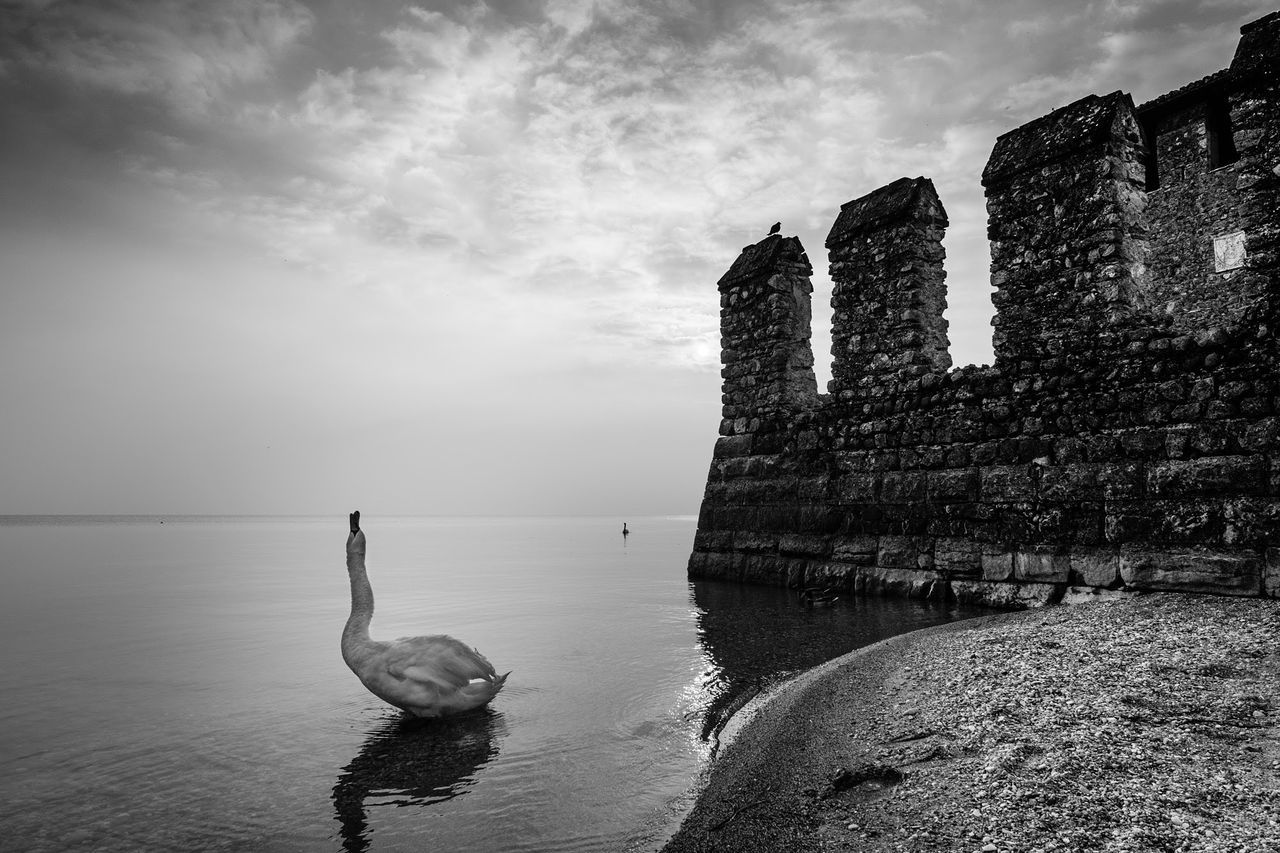 Swan at the lake Swan Water Cloud - Sky Lake Bird Outdoors Nature Animal Themes Italy Monochrome Fujifilm Xpro2 Fujixseries Xpro2 Sirmione Blackandwhite Gardalake Garda Lake Italy