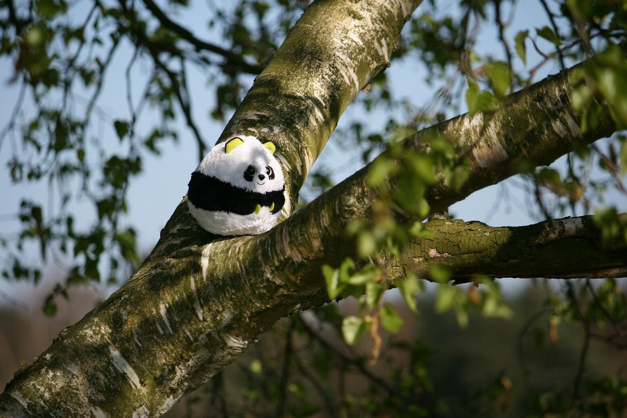 Beautiful stock photos of panda, Animal Representation, Branch, Day, Growth