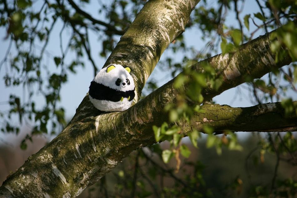 Beautiful stock photos of panda, Animal Representation, Branch, Day, Growth