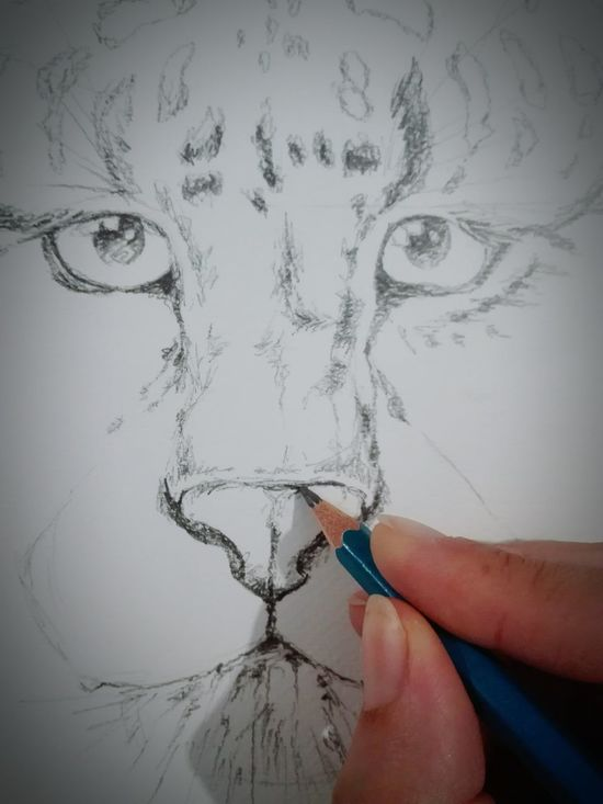 Human Body Part Human Hand One Person People Indoors  Child Children Only Close-up Day Adult Drawing Draw Pain Painting Leopard Lapiz Leopardo Dibujar Dibujando Pencil Drawing Pencil Paper