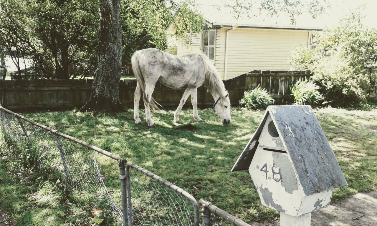 Animal Themes Architecture Built Structure Day Domestic Animals Horse Horse In Housing Estate Horse In The Garden Mammal Nature New Zealand No People Outdoors Pose Residential Building Tree Turangi, New Zealand Wire Fence