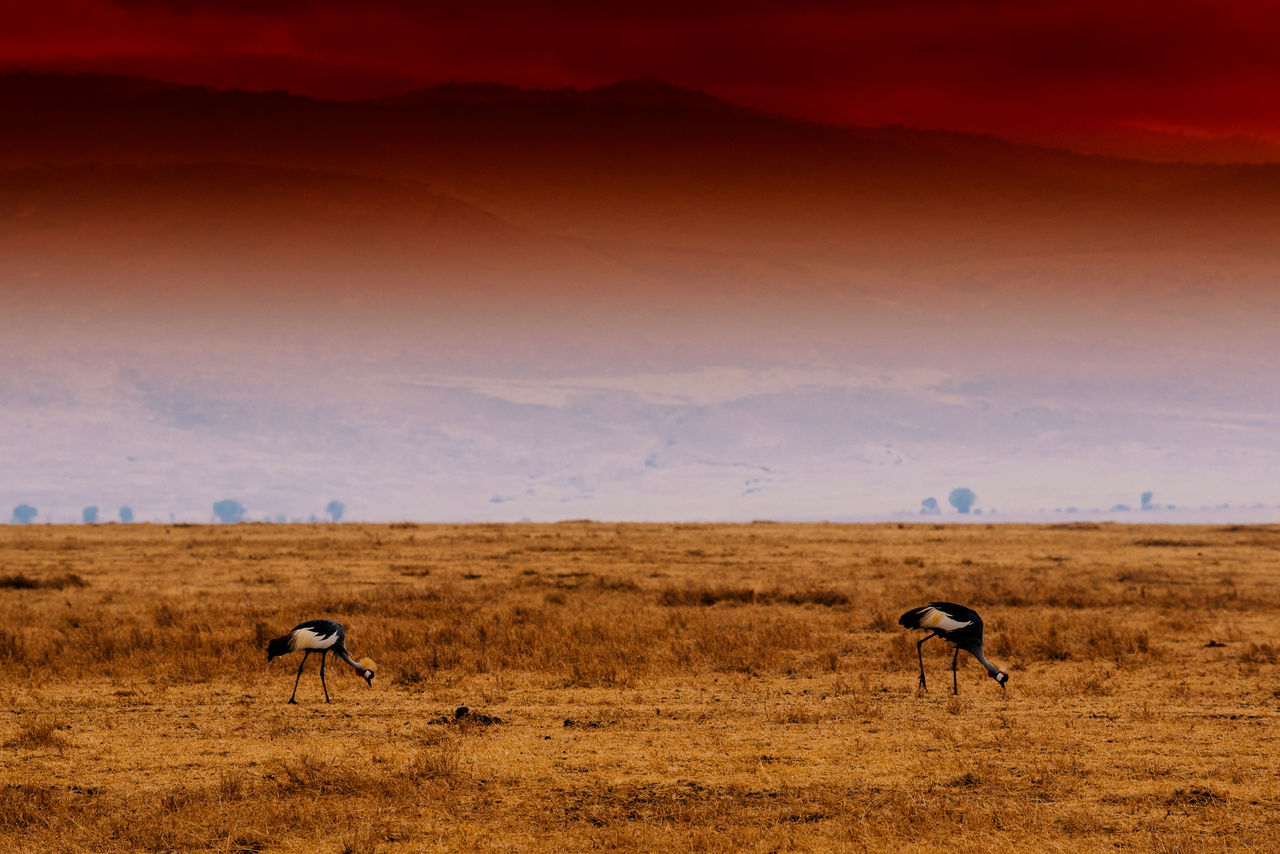 Animal Themes Animal Wildlife Animals In The Wild Arid Climate Arusha Full Length Grass Grazing Horizon Over Land Landscape Nature Ngorongoro Ngorongoro Crater No People Outdoors Plain Safari Safari Animals Serengeti Serengeti National Park Sky Standing Tanzania Wildlife Zebra
