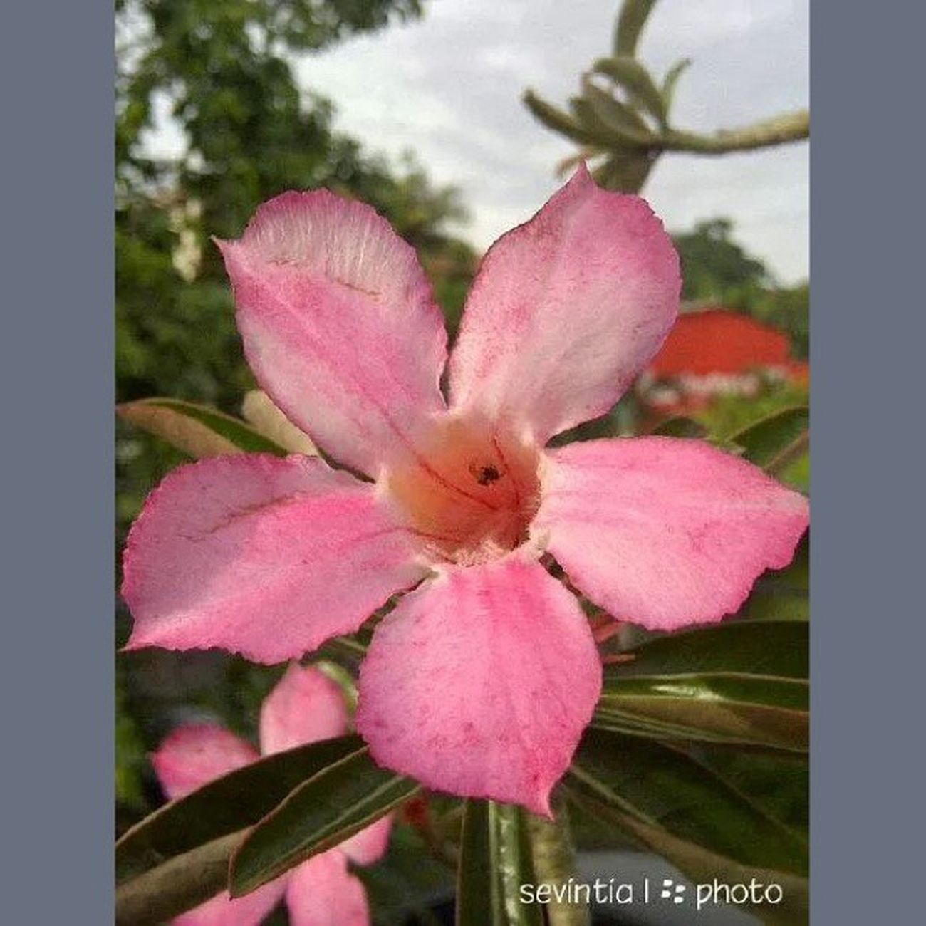 Flower again <3 Flower Blackberrycamera Blackberrymonza Blackberry9860 justashot latepost lateupload