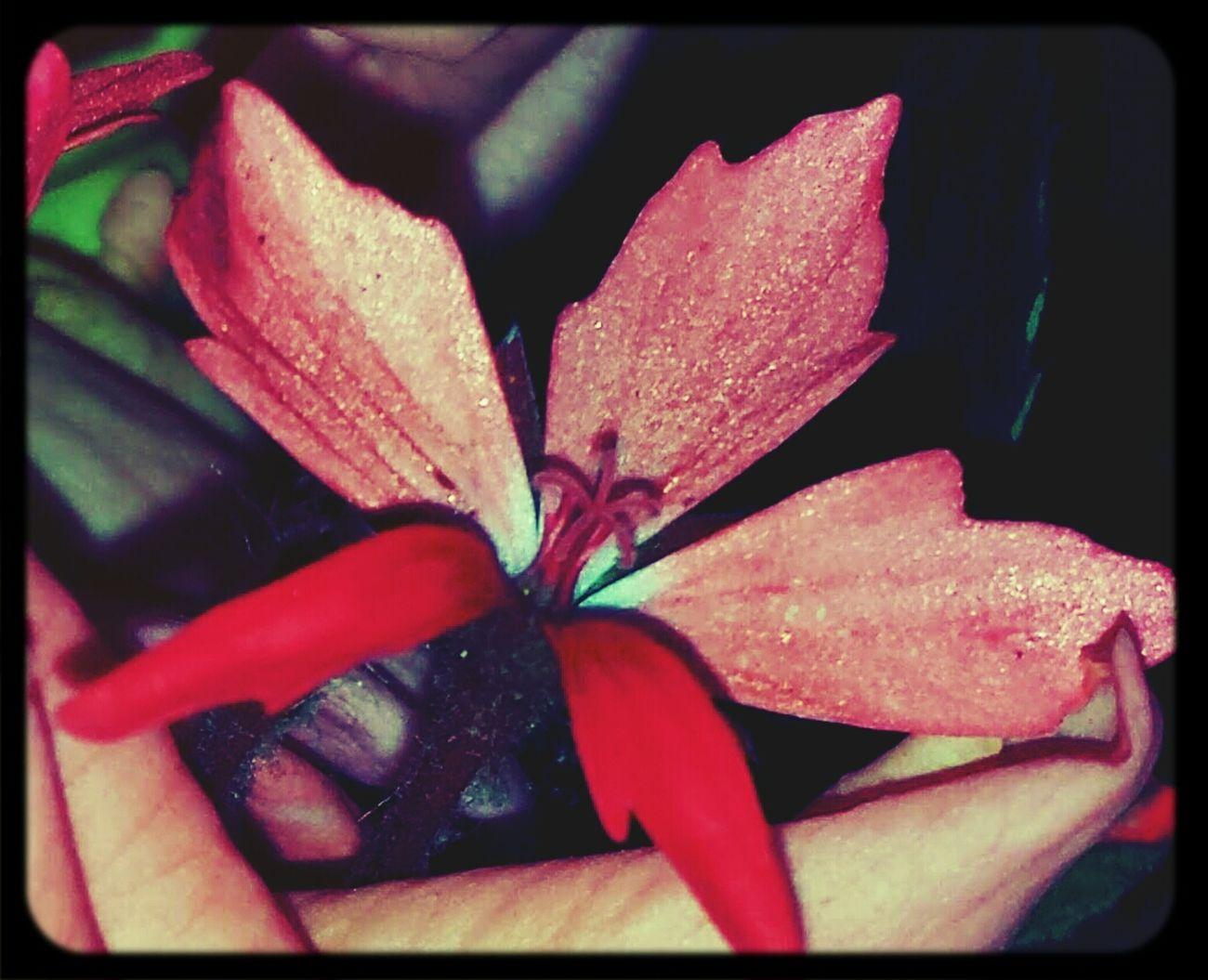 Wonhglück Garden Flowers Flower Power
