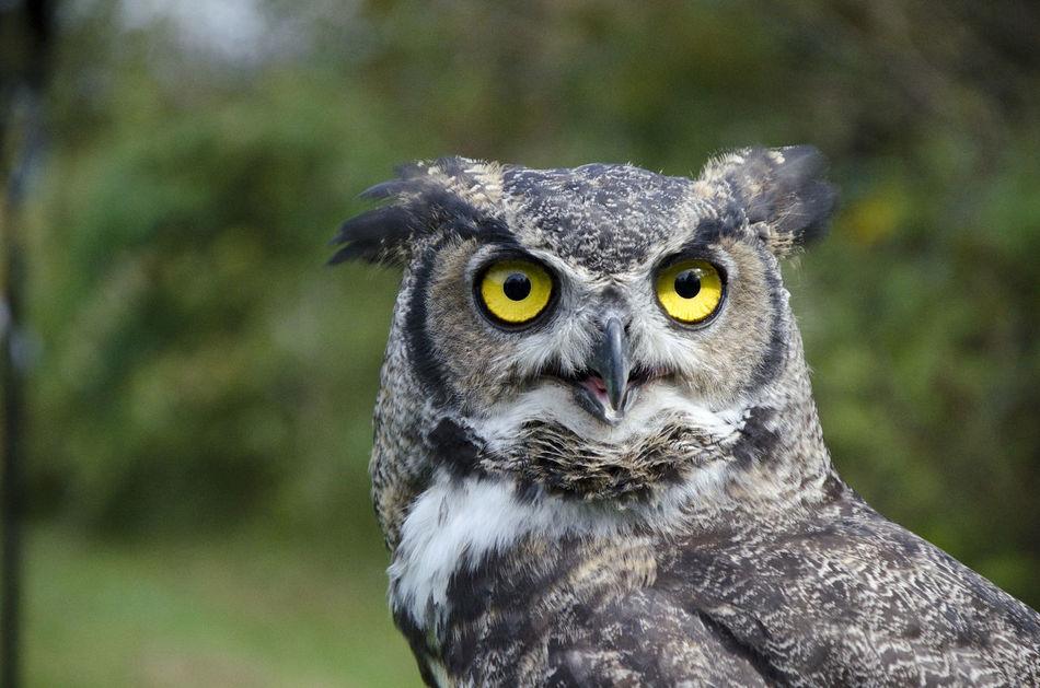 Beautiful stock photos of eule, Alertness, Animal Eye, Animal Themes, Animal Wildlife