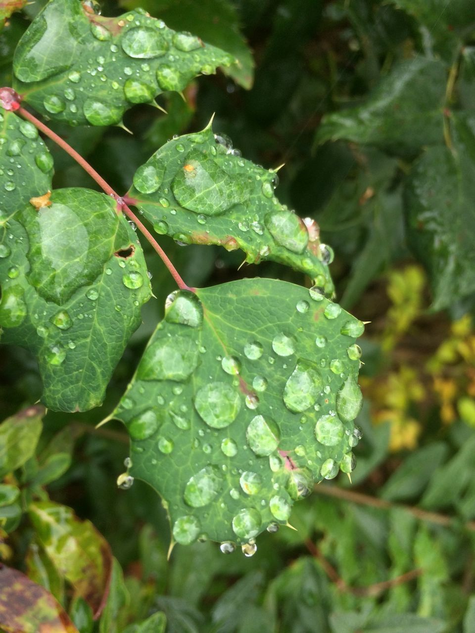 green color, leaf, drop, growth, water, nature, wet, close-up, day, plant, freshness, outdoors, raindrop, beauty in nature, no people, fragility