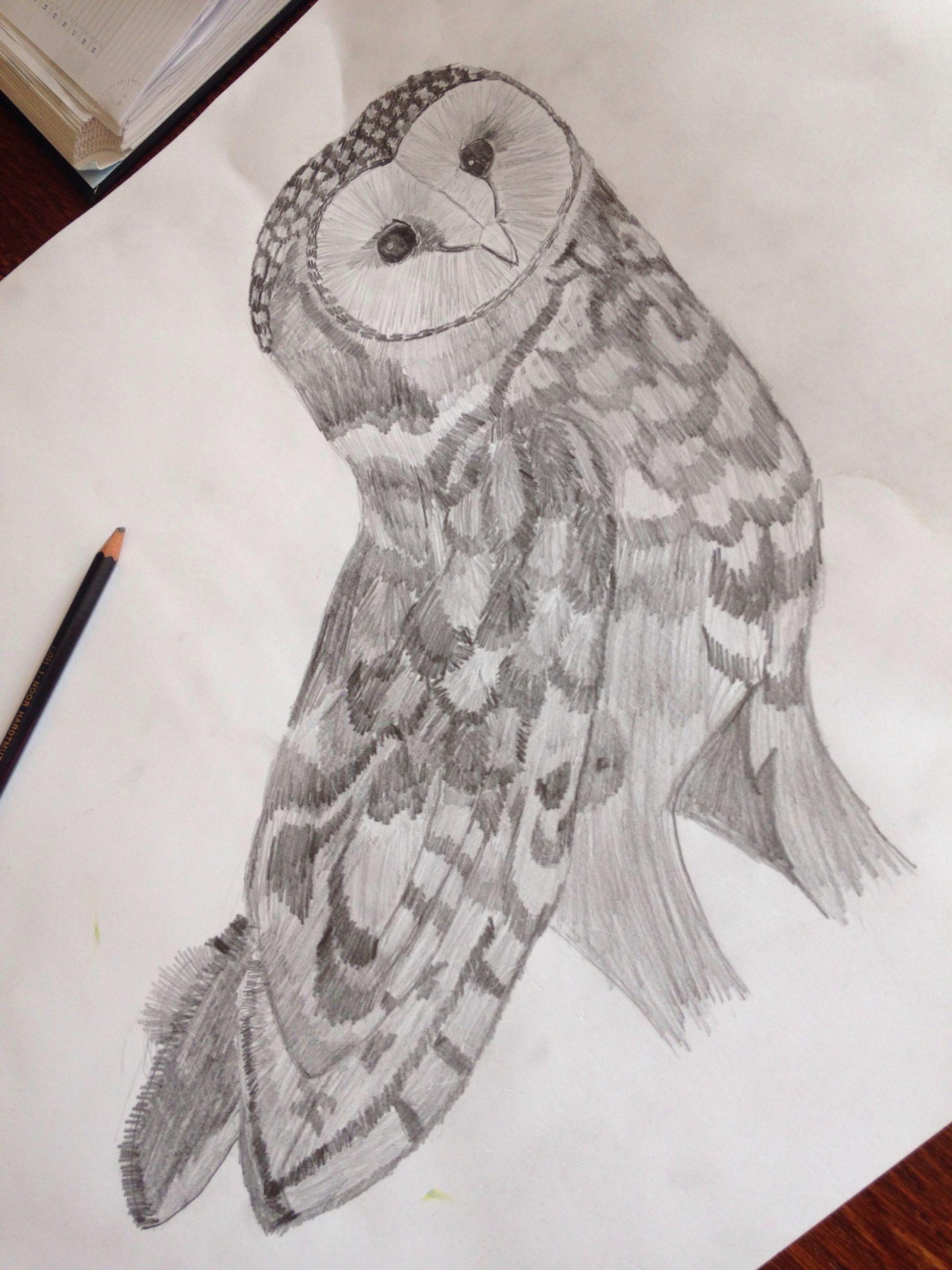 My first owl. :) :D