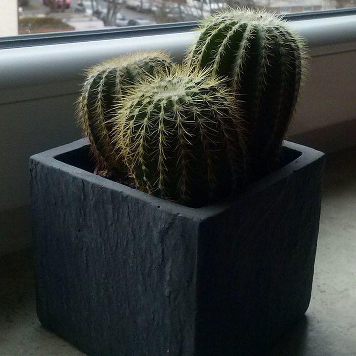 Ich weiß nicht warum aber ich liiieeebee Kakteen Kaktus Kaktusse Green Love naturKakteen