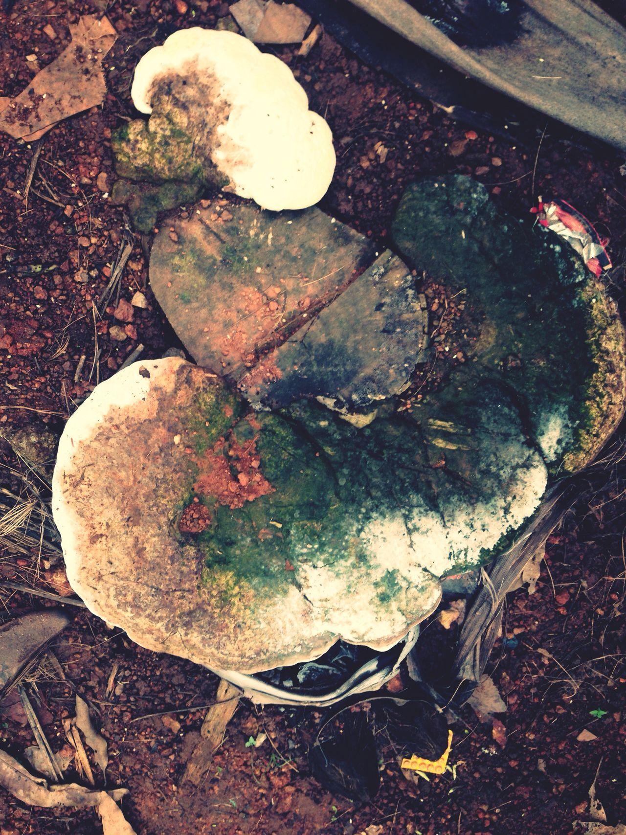 Fungal bloom Fungus Revival