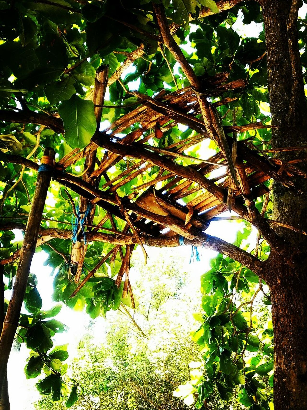 Tree Growth Nature No People Day Branch Low Angle View Beauty In Nature Outdoors Plant Close-up Cloud - Sky Beauty In Everything Photooftheday The Street Photographer - 2017 EyeEm Awards EyeEmNewHere Pattern Sunlight Backgrounds Tree Trunk Taking Pictures Leaves Green Paint Decay Eye Em Nature Lover Philippinesphotography
