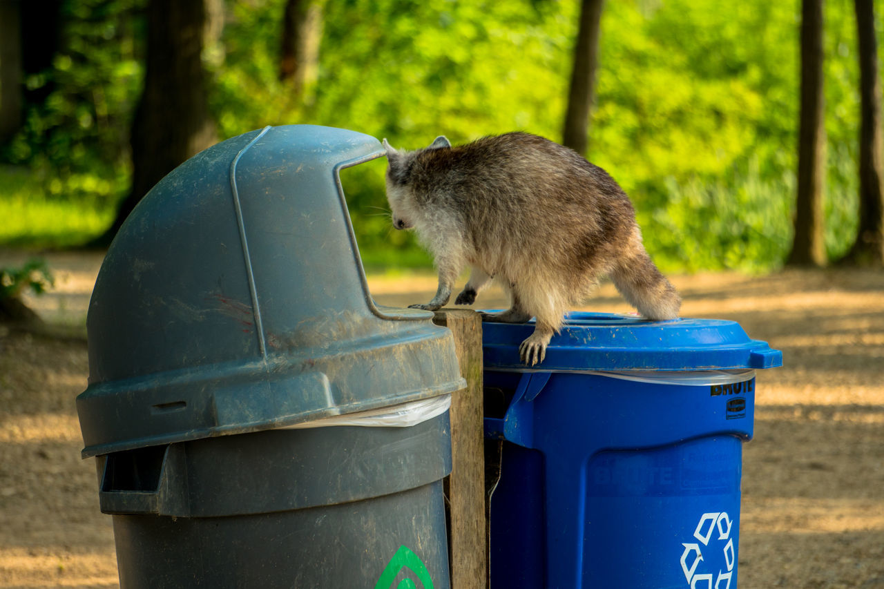 garbage bin, garbage can, garbage, animal themes, one animal, outdoors, day, environmental issues, focus on foreground, drum - container, tree, mammal, no people, nature