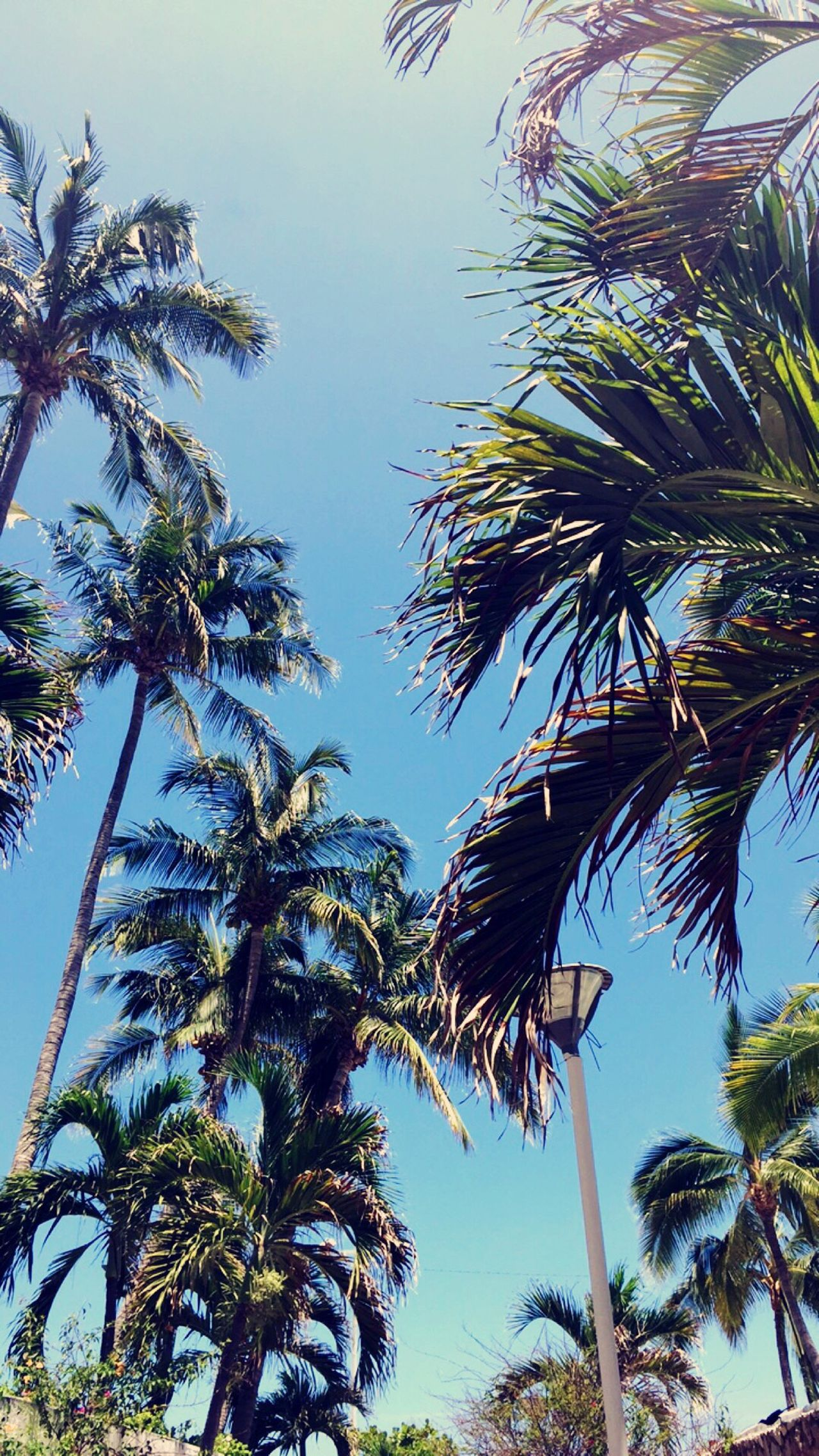 Palm Tree Tree Low Angle View Growth Nature Tree Trunk Day No People Beauty In Nature Sky Outdoors Clear Sky Scenics Palmer Palmeras IPhoneography Green Color Nature Beauty In Nature Belleza Natural Verano Tropical Climate Tropical Tropical Paradise Tropical Plants