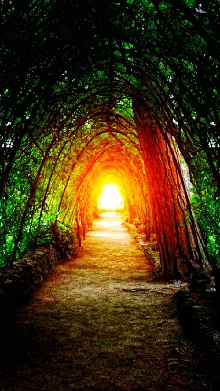 the way forward, nature, tree, light at the end of the tunnel, beauty in nature, tranquility, no people, day, outdoors