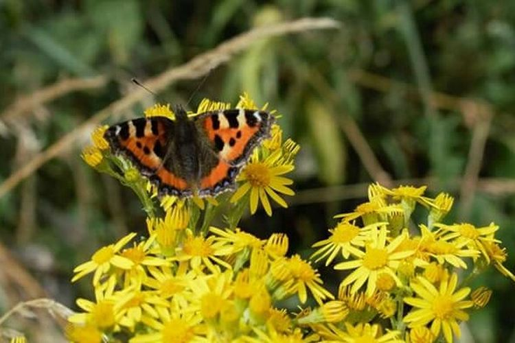 Flower Butterfly - Insect Animal Wildlife Animals In The Wild Nature Fragility No People Beauty In Nature Perching Close-up Insect One Animal