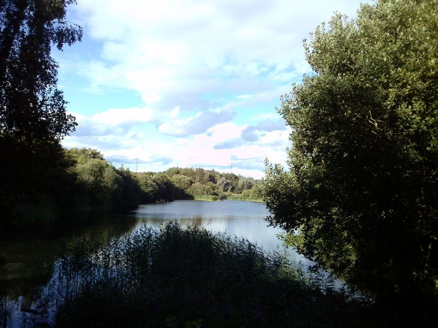 Loanhead pond Cute Ducks Pond Nature Trees Water Leaves Day Beauty In Nature Tranquility Outdoors Green Color Relaxing Sunny Day Branches Woods No People Landscape