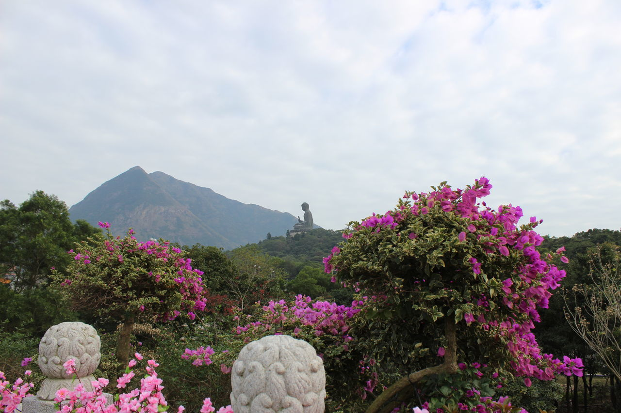 Flower Mountain Landscape Nature Plant No People Beauty In Nature Fragility Scenics Sky Outdoors Day Beauty In Nature Travel Destinations HongKong Travel Photography Mountain Range Cloud - Sky Tian Tan Buddha (Giant Buddha) 天壇大佛 Nature Travel