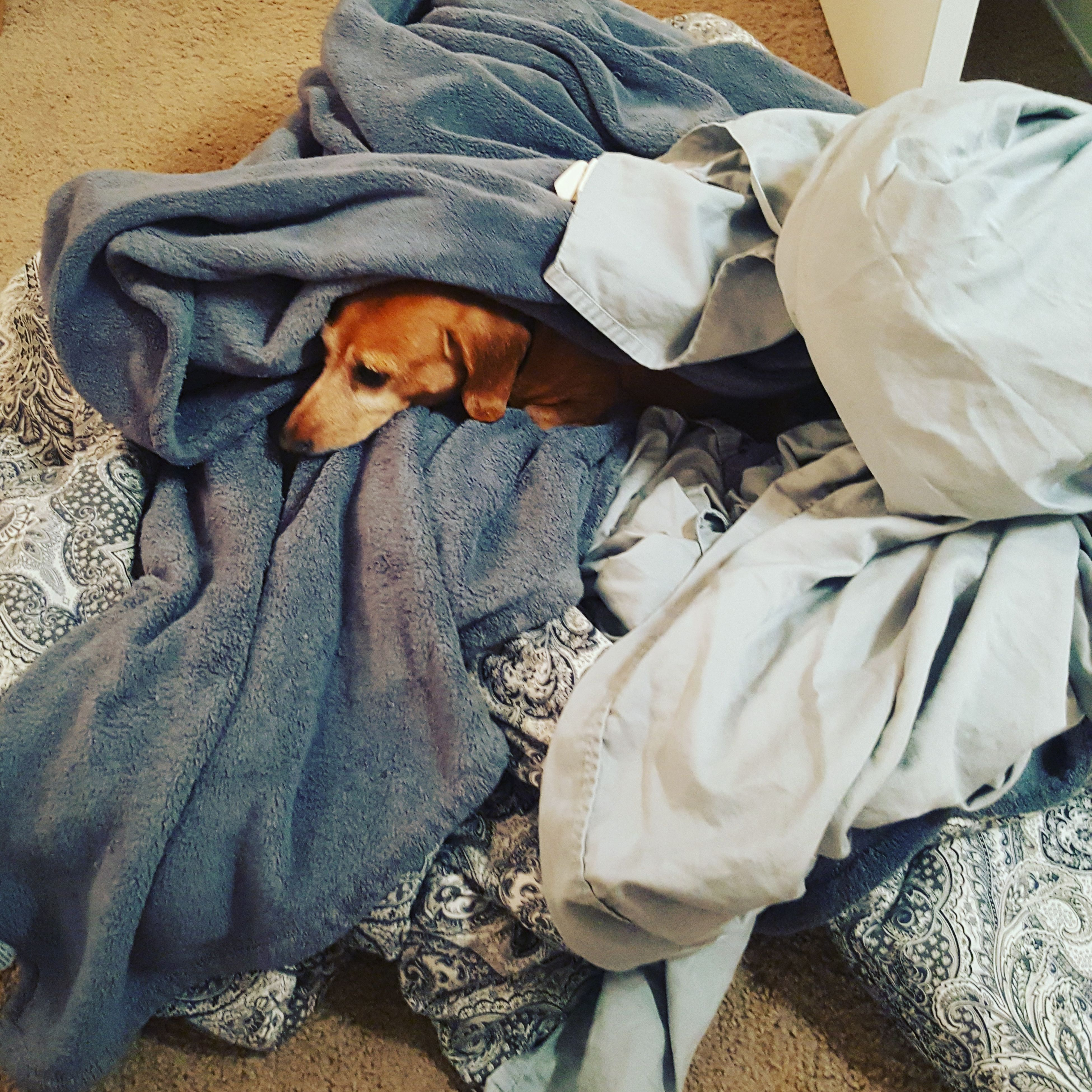 pets, bed, one animal, domestic animals, animal themes, mammal, dog, indoors, relaxation, bedroom, lying down, pillow, no people, close-up, day