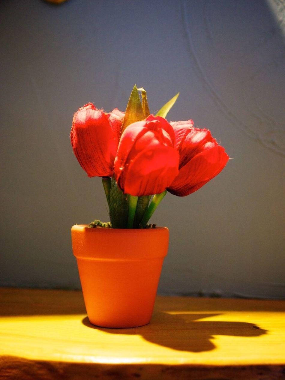 Busan Interior Design DIY Flowers Rose🌹 April Taking Photos Traveling Olympus E-P3 14-54mm II