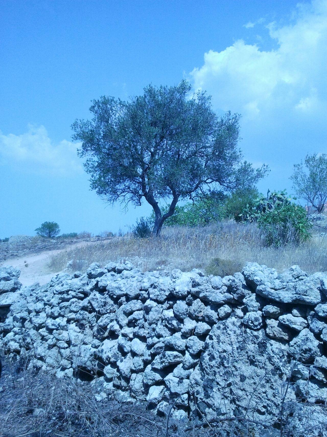 Hanging Out EyeEm Nature Lover Ulivi Puglia